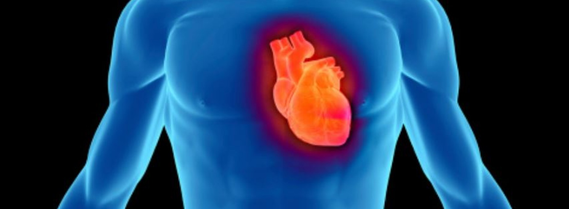 All you need to know about coronary circulation