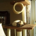 Armarkat Cat tree Furniture Condo, Height -70-Inch to 75-Inch reviews picture (13)