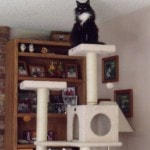 Armarkat Cat tree Furniture Condo, Height -70-Inch to 75-Inch reviews picture (7)