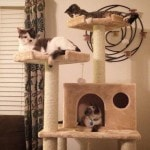 Armarkat Cat tree Furniture Condo, Height -70-Inch to 75-Inch reviews picture (8)