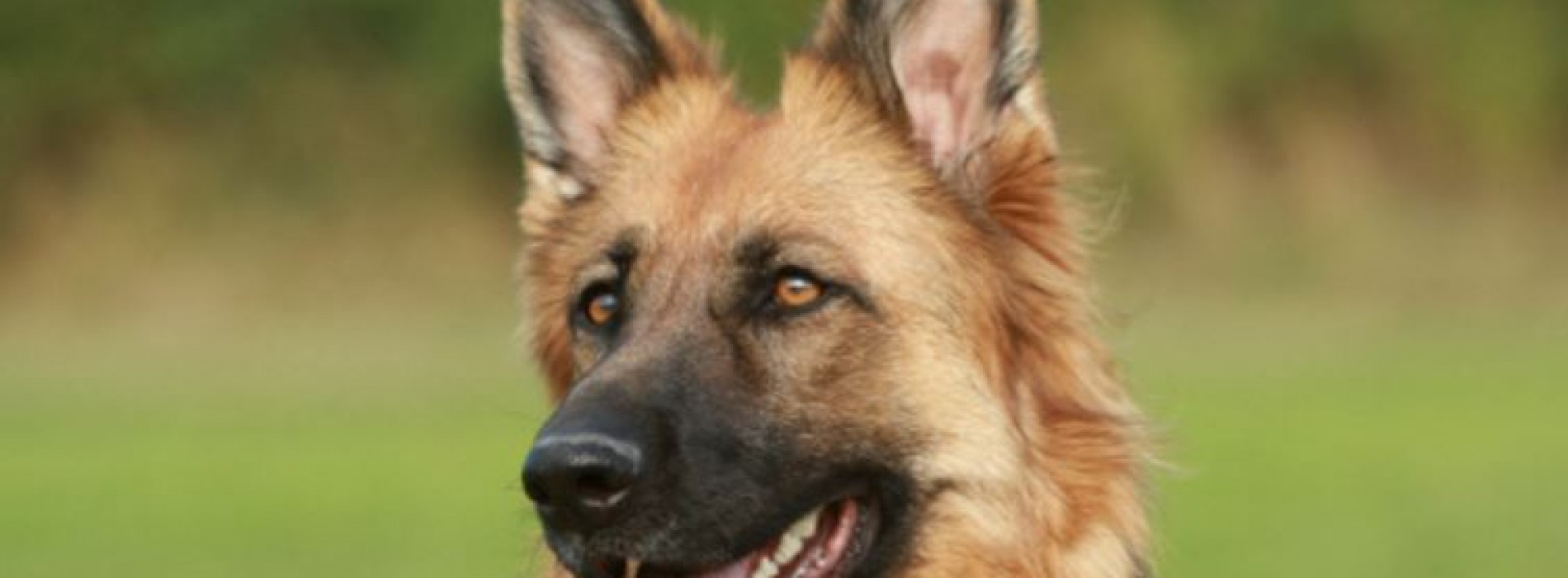 Reviews – The Best Dog Food For German Shepherd