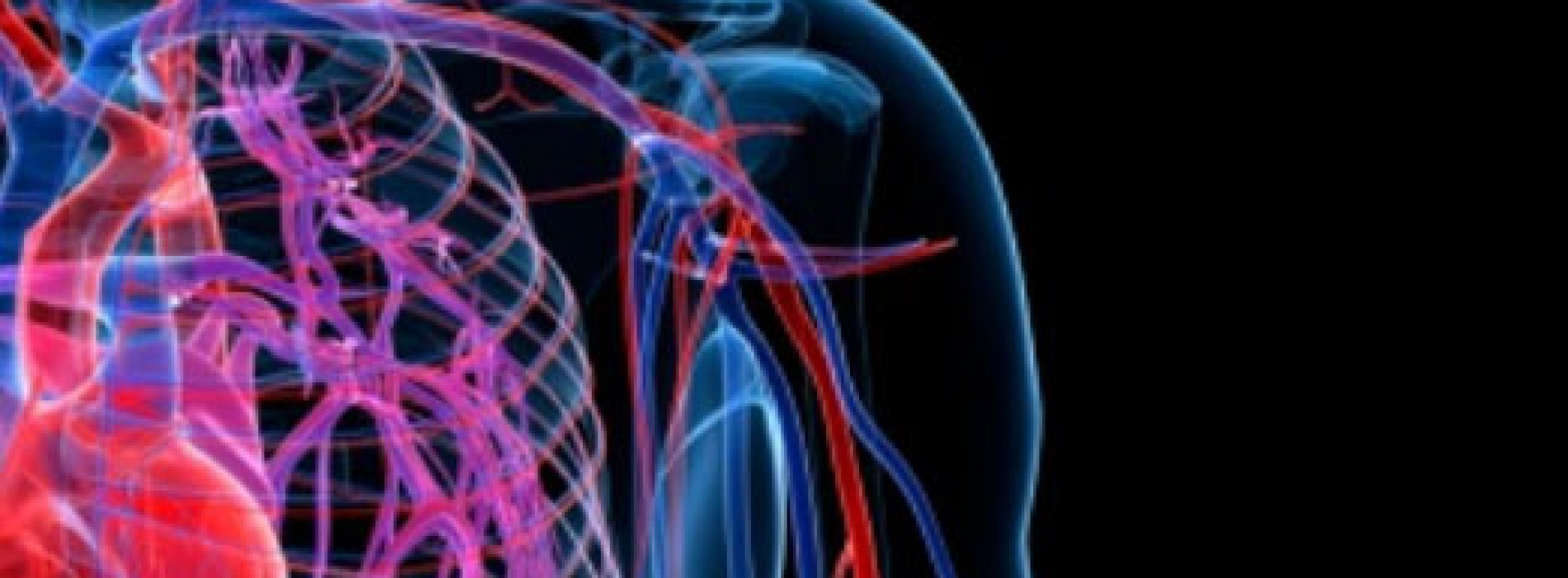 Facts, functions and diseases of human circulatory system