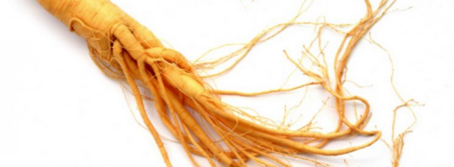 Ficus Ginseng – All you need to know