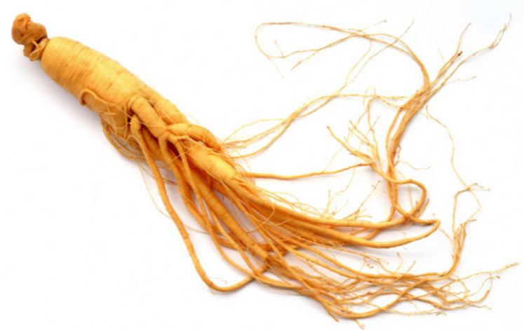 Ficus Ginseng All You Need To Know