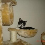 Go Pet Club Cat Tree Condo Furniture reviews picture (1)