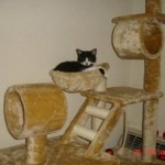 Go Pet Club Cat Tree Condo Furniture reviews picture (4)