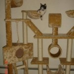 Go Pet Club Cat Tree Condo Furniture reviews picture (5)