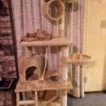 Go Pet Club Cat Tree Furniture 62 reviews pictures (1)