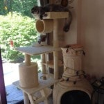 Go Pet Club Cat Tree Furniture 62 reviews pictures (2)