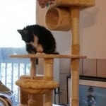 Go Pet Club Cat Tree Furniture 62 reviews pictures (3)