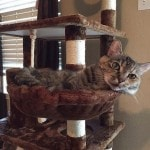 Go Pet Club Cat Tree Furniture 62 reviews pictures (8)
