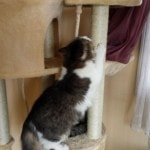 Go Pet Club Huge Cat Tree reviews picture (1)