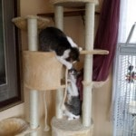 Go Pet Club Huge Cat Tree reviews picture (2)