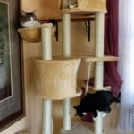Go Pet Club Huge Cat Tree reviews picture (4)