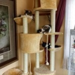 Go Pet Club Huge Cat Tree reviews picture (6)