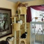 Go Pet Club Huge Cat Tree reviews picture (7)