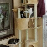 Go Pet Club Huge Cat Tree reviews picture (8)