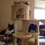 Go Pet Club Huge Cat Tree reviews picture (9)