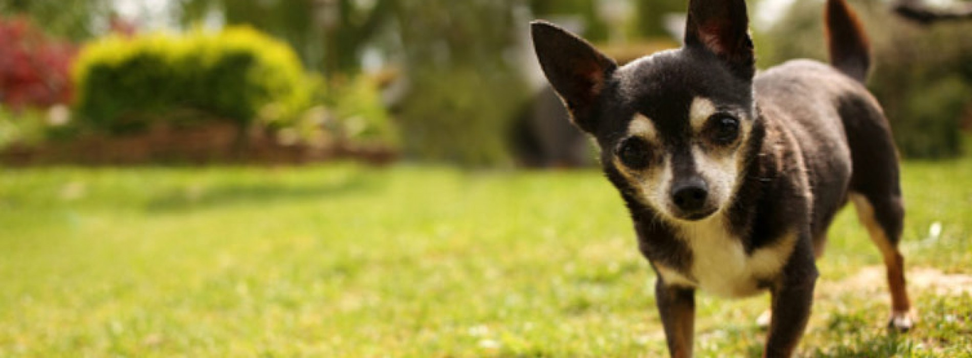 How your dogs get heartworm disease
