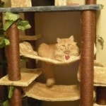 Kitty Mansions Cat Tree real pictures (1)