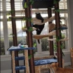 Kitty Mansions Cat Tree real pictures (3)
