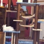 Kitty Mansions Cat Tree real pictures (4)