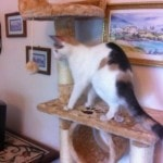 Kitty Mansions Shanghai Cat Tree reviews picture (1)