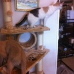 Kitty Mansions Shanghai Cat Tree reviews picture (3)