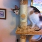 Kitty Mansions Shanghai Cat Tree reviews picture (5)