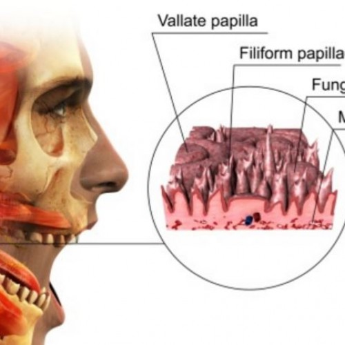 What Is Circumvallate Papillae – Treatment & Causes
