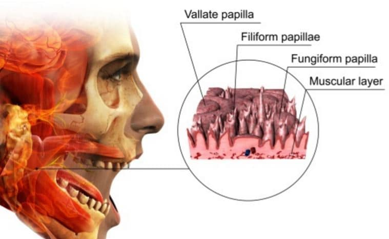 What Is Circumvallate Papillae Treatment Amp Causes